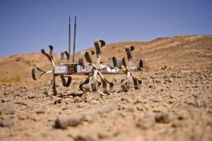 Puli Rover in the Moroccan Desert (c) OeWF (Katja Zanella-Kux)