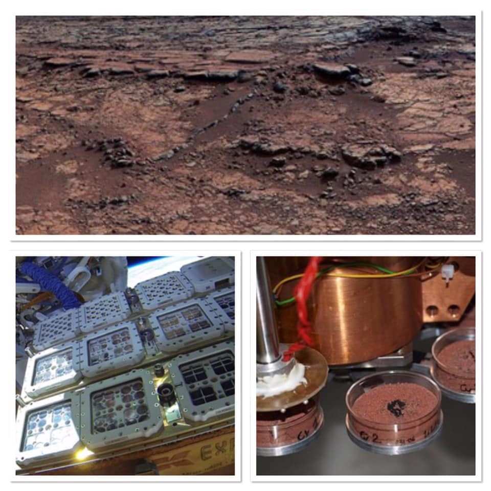 BIOlogy and Mars EXperiment (BIOMEX)