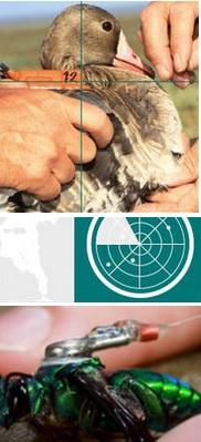 Projekt Icarus: Tierforschung aus dem All