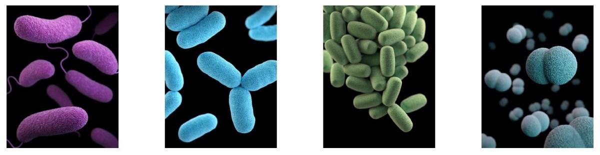 3D illustration of bacteria (c) Unsplash